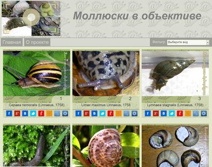 Скриншот сайту 'Моллюски в обьективе'