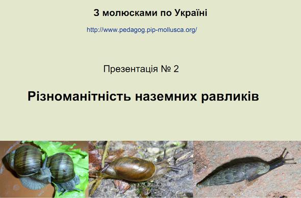 Різноманітність наземних равликів