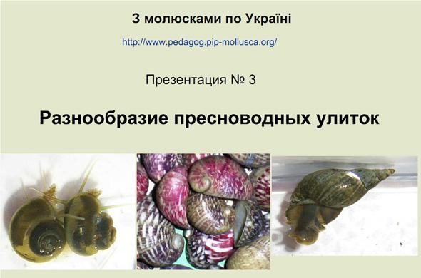 Разнообразие пресноводных улиток