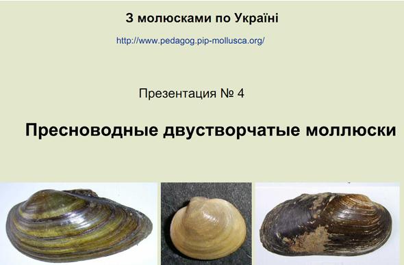 Пресноводные двустворчатые моллюски