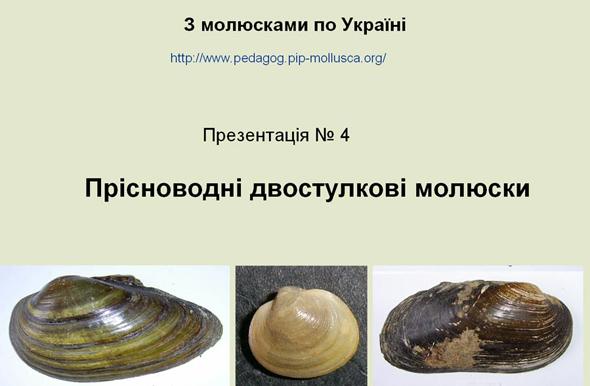 Прісноводні двостулкові молюски
