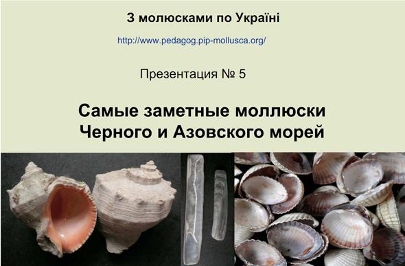 Самые заметные моллюски Черного и Азовского морей
