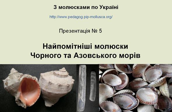 Найпомітніші молюски Чорного і Азовського морів