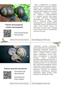 Серія карток 'Найпомітніші молюски України'. Картка №1