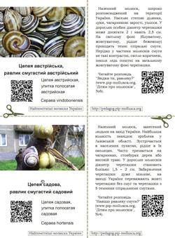 Серія карток 'Найпомітніші молюски України'. Картка №2