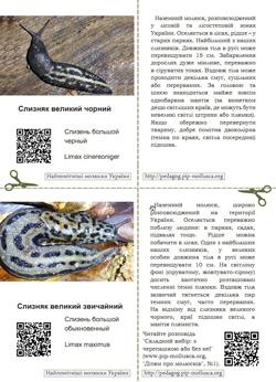 Серія карток 'Найпомітніші молюски України'. Картка №3