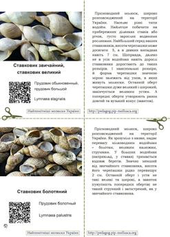 Серія карток 'Найпомітніші молюски України'. Картка №4