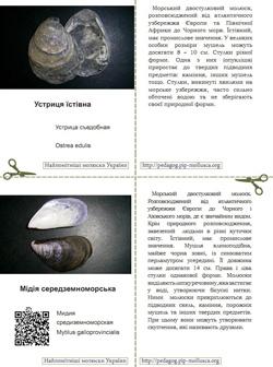 Серія карток 'Найпомітніші молюски України'. Картка №7