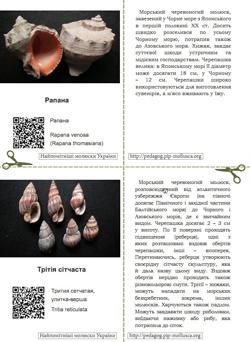 Серія карток 'Найпомітніші молюски України'. Картка №8