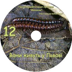 Диск 'Вони живуть у Львові'. Приклад оформлення диску №12
