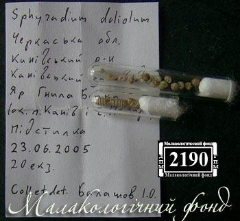 Sphyradium doliolum