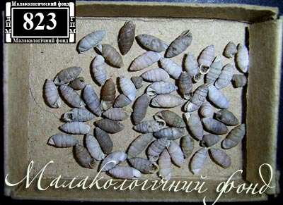 Granaria frumentum