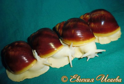 Archachatina puylaerti (Фото 5)