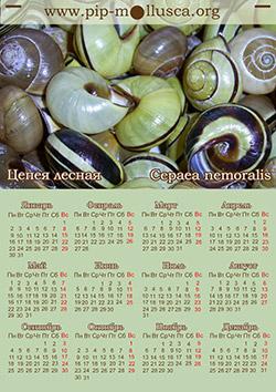 """Календарь на 2017 год """"Cepaea nemoralis"""""""