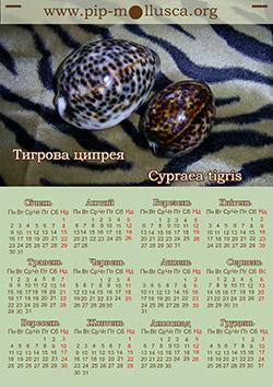 "Календарь на 2017 год ""Cypraea tigris"""