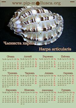 "Календар на 2017 рік ""Harpa articularis"""