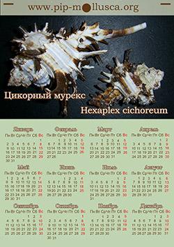 """Календар на 2017 рік """"Hexaplex cichoreum"""""""