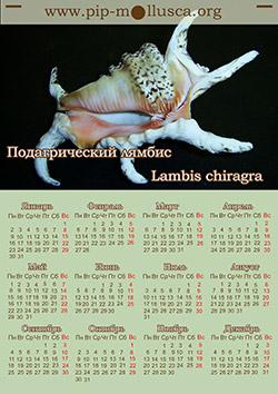 """Календар на 2017 рік """"Lambis chiragra"""""""