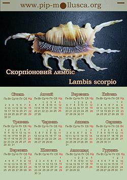 "Календар на 2017 рік ""Lambis scorpio"""