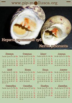 """Календарь на 2017 год """"Nerita peloronta"""""""