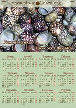 "Календар на 2017 рік ""Theodoxus fluviatilis"""