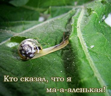 Plicuteria lubomirskii