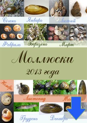 Рейтинг моллюсков 2013 г.